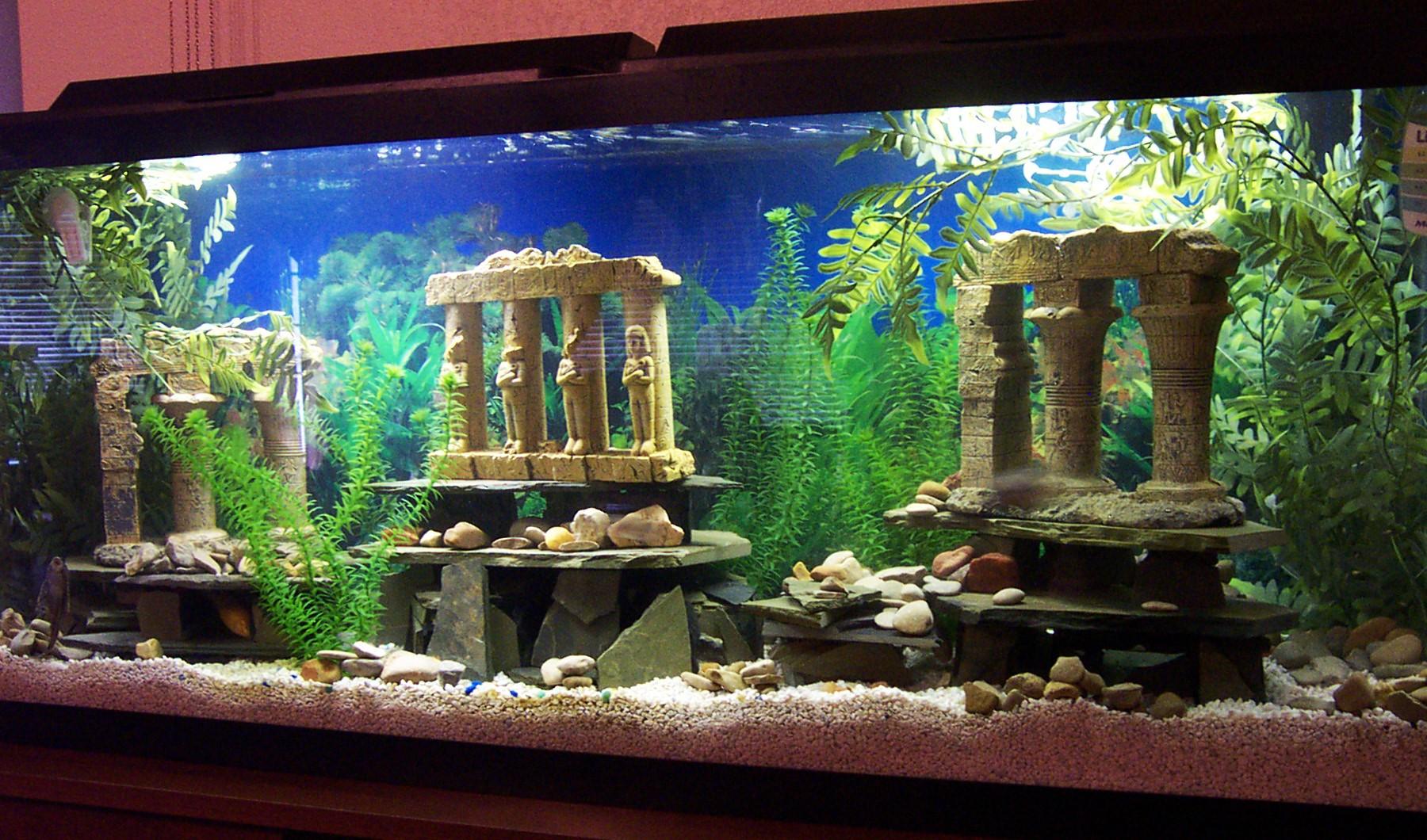 картинки декорации в аквариум чарующая прекрасная, давних
